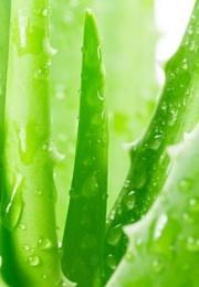 Moc zielonych składników